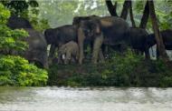 दिल्ली /Lockdown के दौरान शिकारियों ने जंगल को किया अशांत, किए दोगुना शिकार: