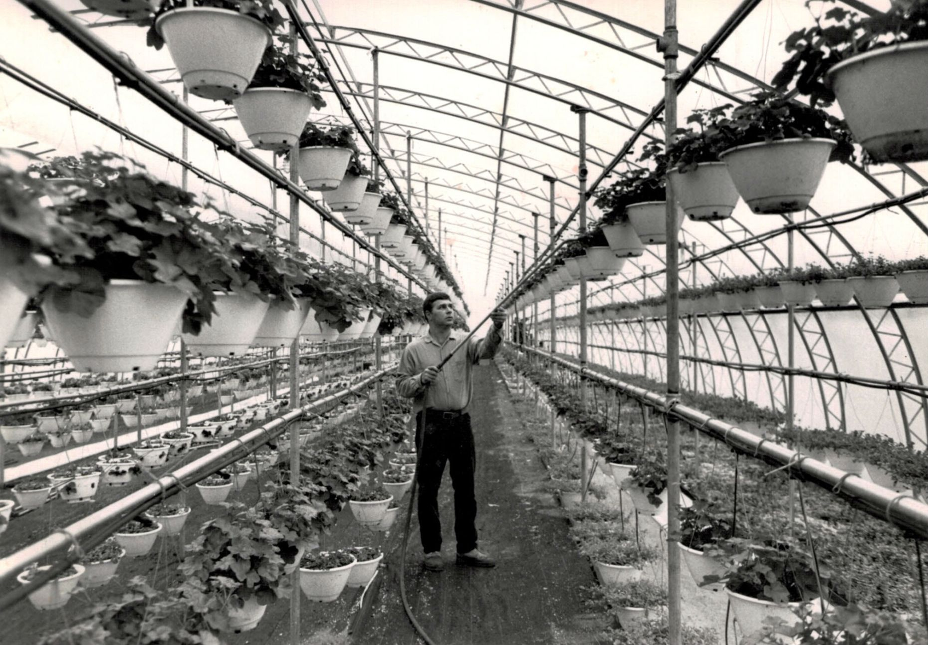 Tom in old greenhouse