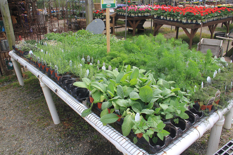 A selection of hardy herbs