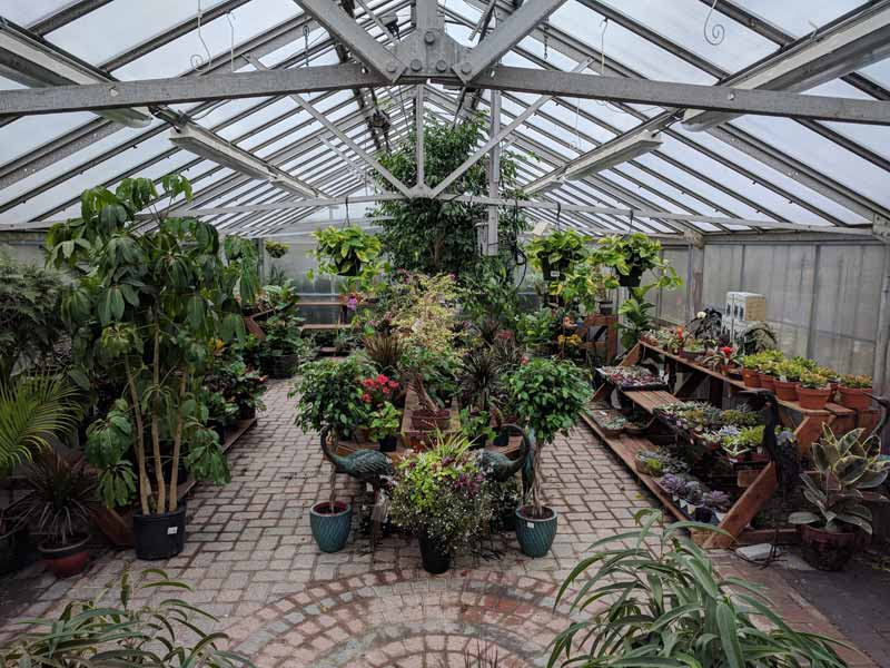 A photo of our plant filled greenhouse in late summer