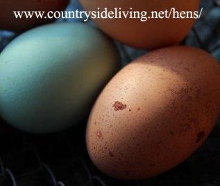 2 желтка в одном яйце: пятнистое вытянутое яйцо курицы породы Маран справа
