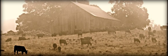 cow pasture and barn