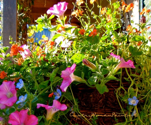 courtyard-flowers