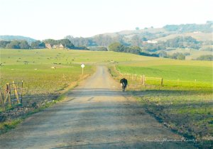 lone-cow-road