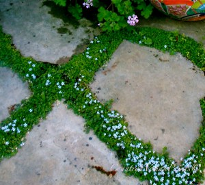 flagstones and groundcovers