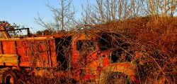 truck in the brambles