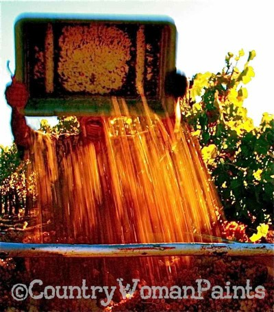 harvest-grapes flowing