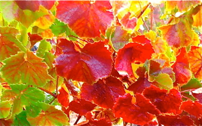 Nature's Paint-flowers+leaves