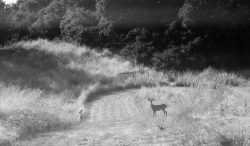 Doe + Babe sonoma mountains, ca