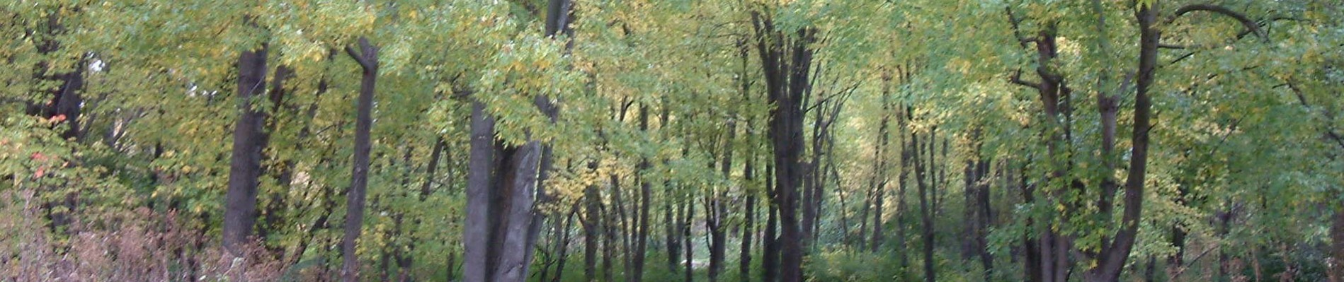 Banner of fall trees