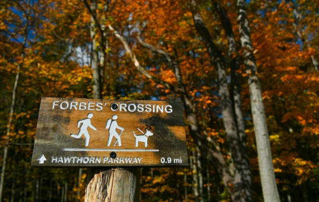 Forbes' Crossing at Forbes Woods in Bedford Reservation