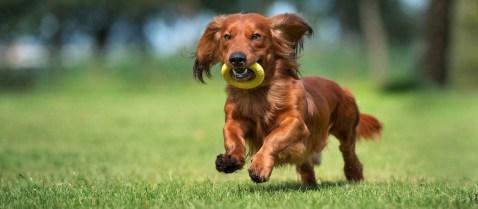 pension chien montauban