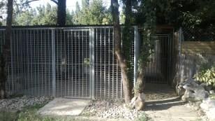 pension chat chien (3)