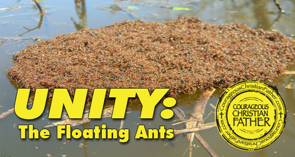 Unity: The Floating Ants