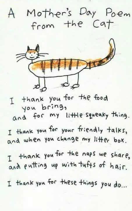 A Mother's Day Poem from the Cat #MothersDay (I thank you for the food you bring, and for my little squeak thing. I thank you for your friendly talks, and when you change my litter box. I thank you for the naps we share, and putting up with tufts of hair. I thank you for these things you do ...)