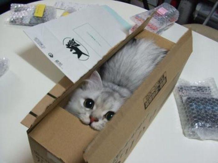 cat-boxes-2780530