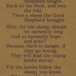 Twas A Sheep Not A Lamb