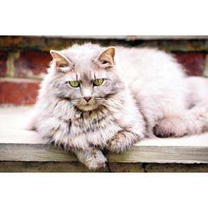 Changes to expect as cats age