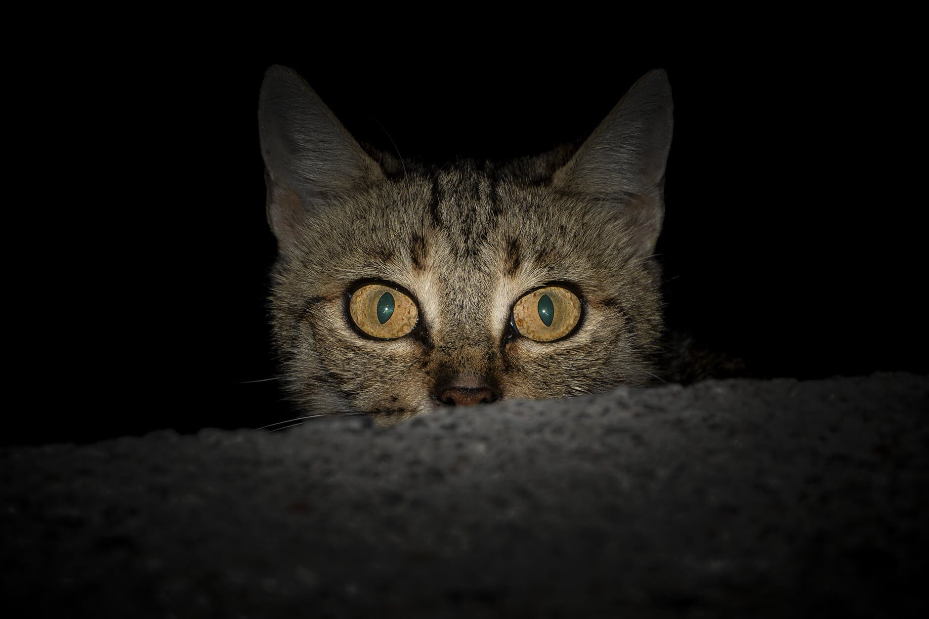 Cats are nocturnal - they are night creatures. In case you didn't know it, but cats are nocturnal. That means they do the most at night. Cats have great night vision. They have six to eight times more rod cells. That helps with low light settings.Their whiskers help them too. That helps them judge if they can fit in places or not. So there you go, another cat fact for you.