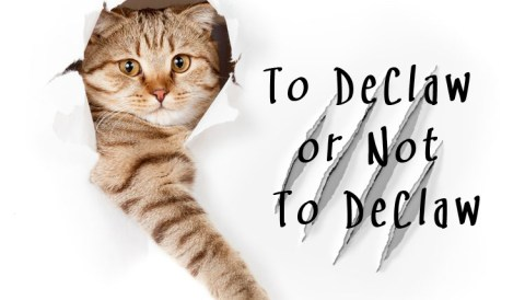 To DeClaw or Not To DeClaw