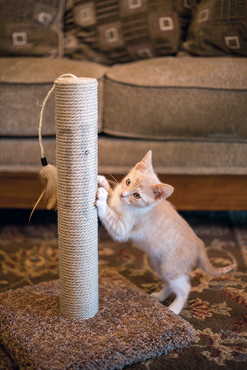 DIY Scratching Post - Designating a spot for your cat to safely scratch is one of the most effective ways to minimize damage to your possessions. A homemade scratching post is a quick and easy project.