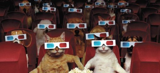 National Pets in Film Day - A day to honor all the pets that have been in film or the movies. #NationalPetsInFilmDay #PetsInFilmDay