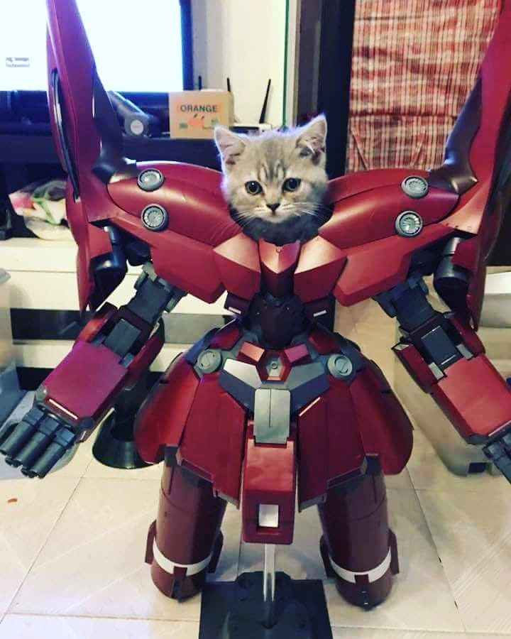 Cat dressed up like a Transformer - I guess you can dress up your cat, even one like a Transformer.