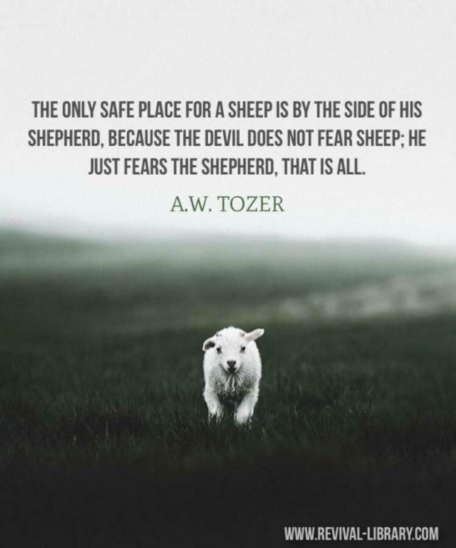Safe Sheep