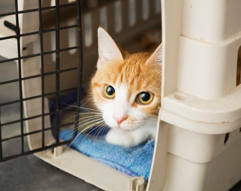 Travel smart at pet-friendly hotels (Cat in a crate) Keep pets in a crate while staying in a hotel room to minimize chances of damage and to calm skittish animals.