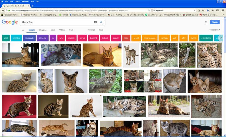 hybrid-cat-screenshot-1812614
