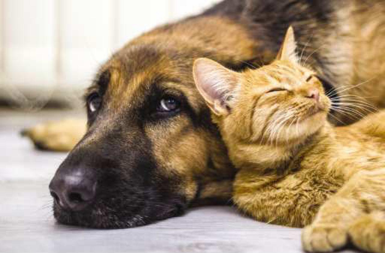 pe164018-cat-dog-3797884