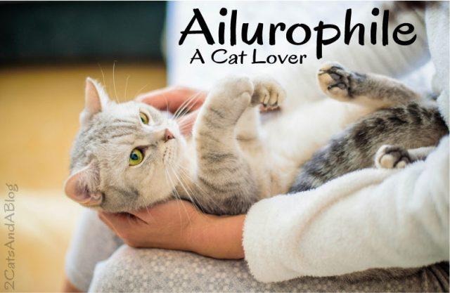 ailurophile-2531670