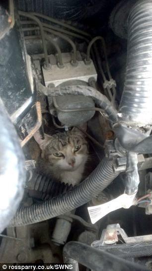 cat-car-hood-4-9849116