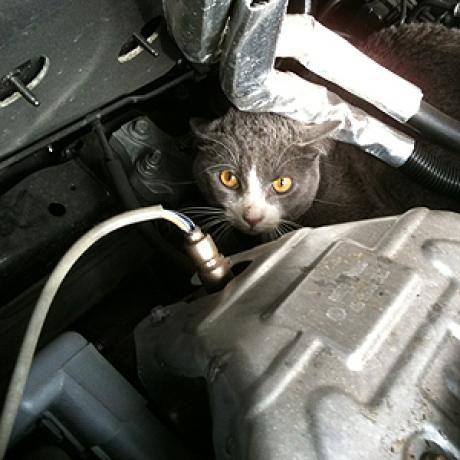 cat-car-hood-4981622