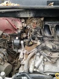 cat-car-hood-6-7758072