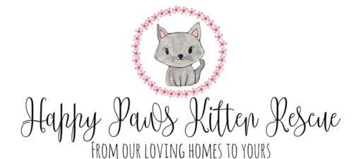 happy-paws-kitten-rescue-6331664