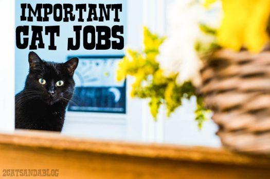 important-cat-jobs-4924792
