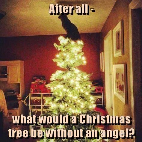 cat-angel-tree-4352795