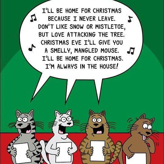 cat-songs-6480132