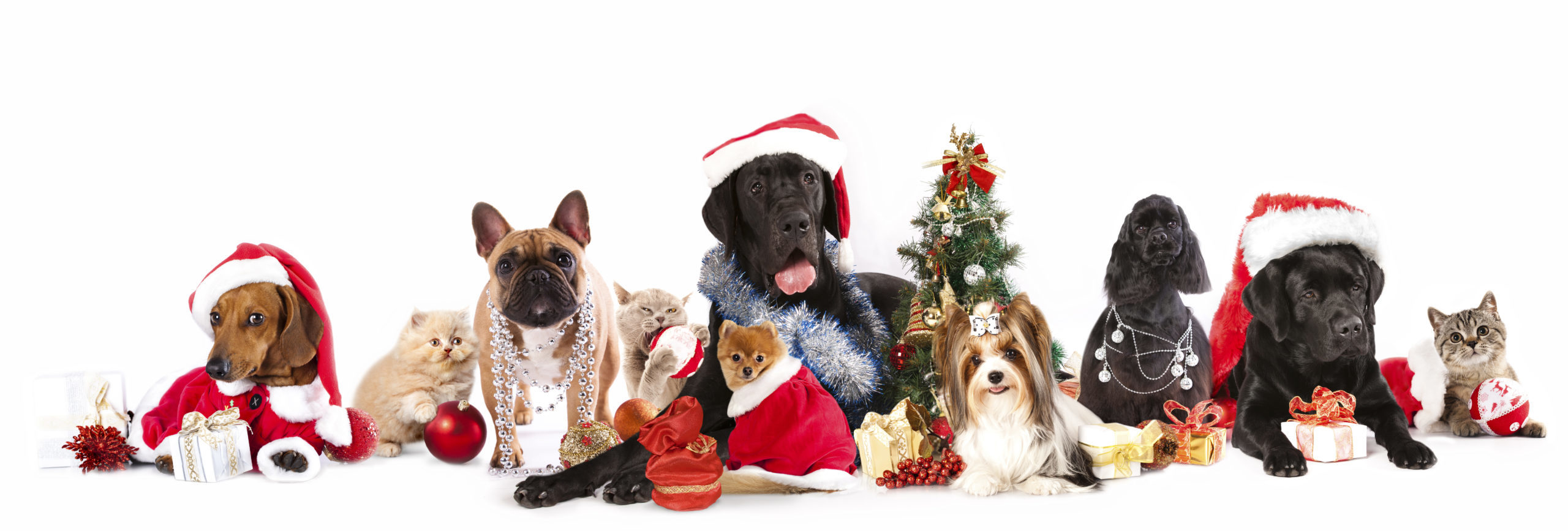 christmas-cats-and-dogs-6012472