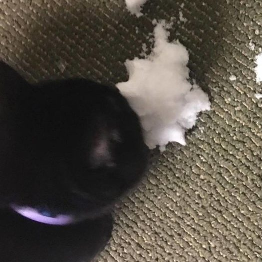 joel-the-brave-eating-snow-7314659