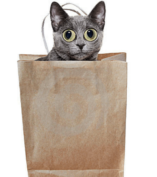cat-in-a-bag-3288246