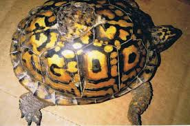 Turtle with God on its shell