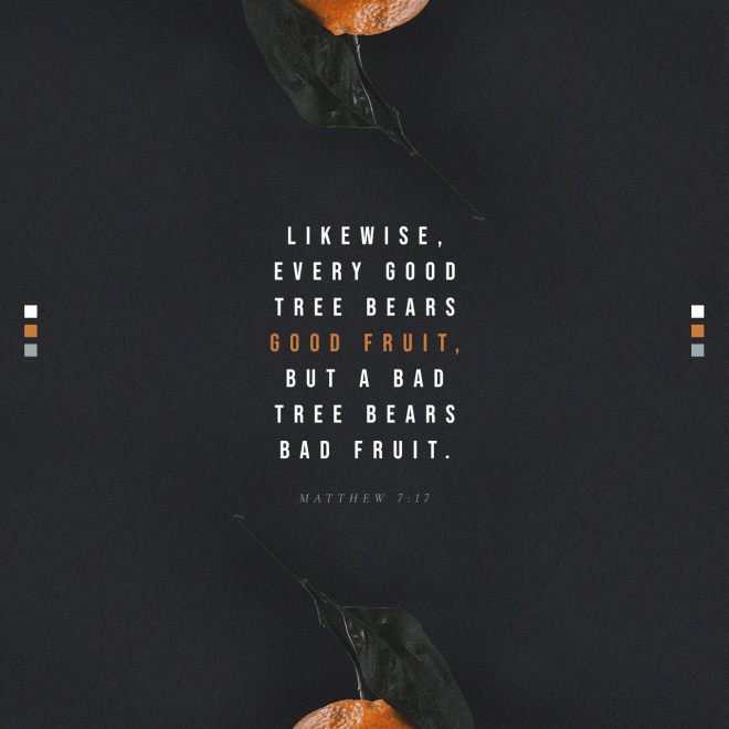 """VOTD October 24 - """"So every good tree bears good fruit, but the bad tree bears bad fruit. A good tree cannot produce bad fruit, nor can a bad tree produce good fruit. Every tree that does not bear good fruit is cut down and thrown into the fire. So then, you will know them by their fruits."""" Matthew 7:17-20 NASB"""