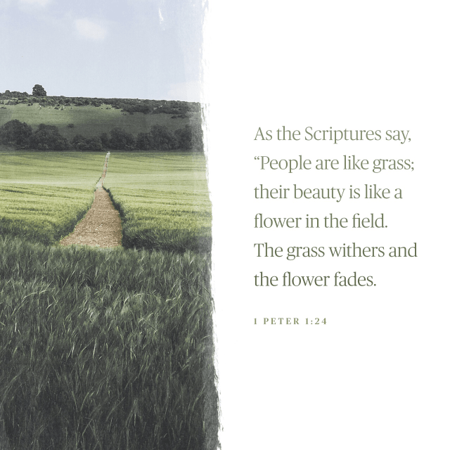 """VOTD October 28- """"For, """"ALL FLESH IS LIKE GRASS, AND ALL ITS GLORY LIKE THE FLOWER OF GRASS. THE GRASS WITHERS, AND THE FLOWER FALLS OFF,""""  1 Peter 1:24 NASB"""