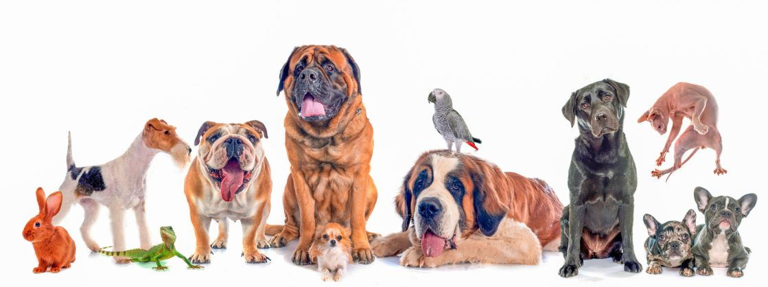 Pet Theft Awareness Day - a day to raise awareness for pet thefts. #PetTheftAwarenessDay