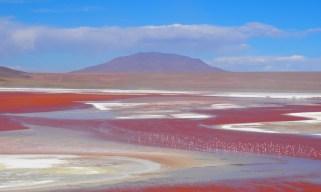 Flamands roses, laguna colorada, Bolivie