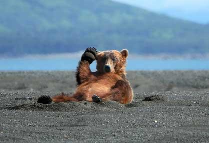 ours sur la plage