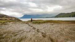 Recherche d'un lieu de bivouac en fin de journée. Ces champs d'algues humides et boueux apparaissent comme de belles prairies hospitalières de loin, il n'en ai rien et il faut poursuivre la recherche...