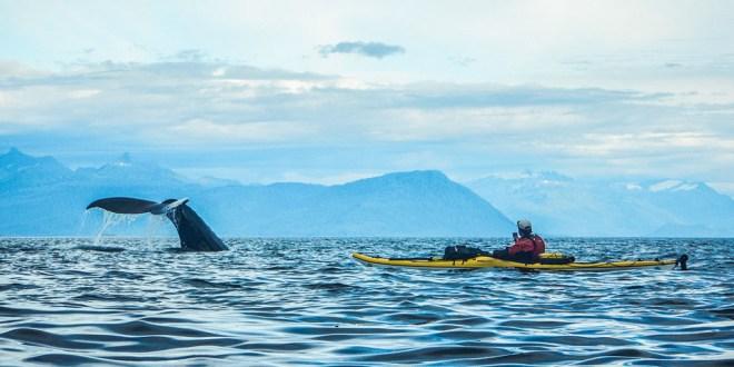 Le film de kayak en terre sauvage sur la route du succès